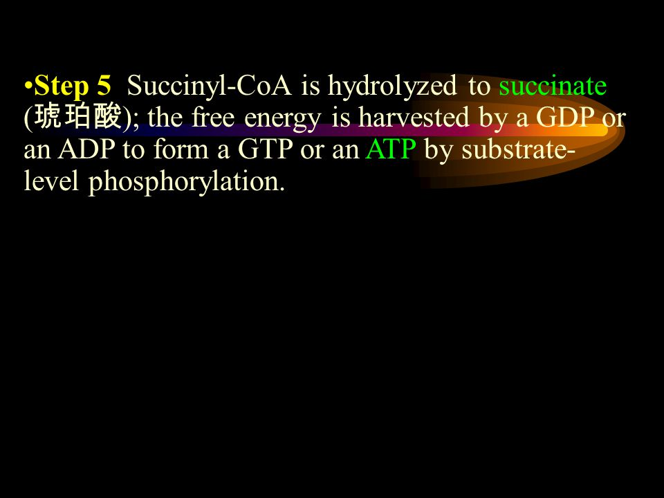 Step 5 Succinyl-CoA is hydrolyzed to succinate ( 琥珀酸 ); the free energy is harvested by a GDP or an ADP to form a GTP or an ATP by substrate- level phosphorylation.