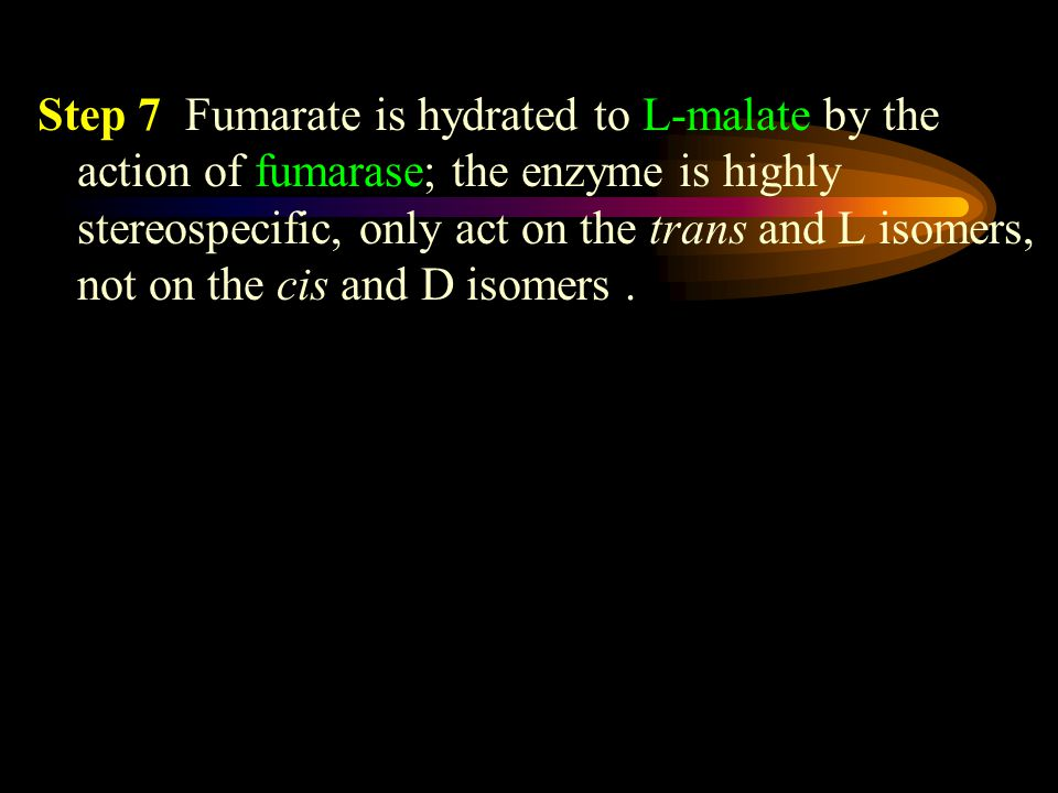 Step 7 Fumarate is hydrated to L-malate by the action of fumarase; the enzyme is highly stereospecific, only act on the trans and L isomers, not on the cis and D isomers.