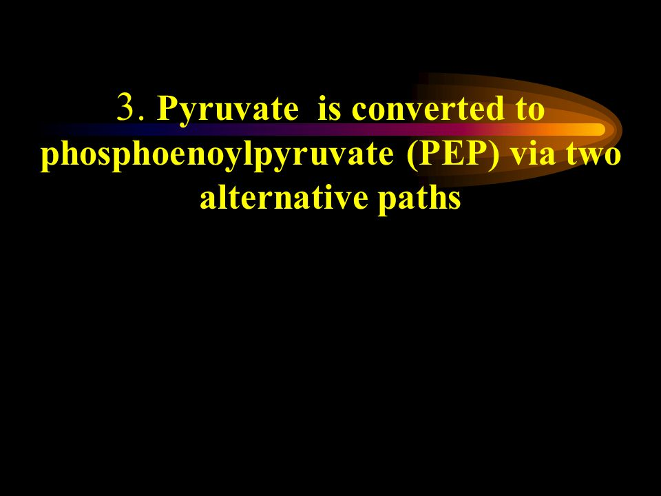 3. Pyruvate is converted to phosphoenoylpyruvate (PEP) via two alternative paths