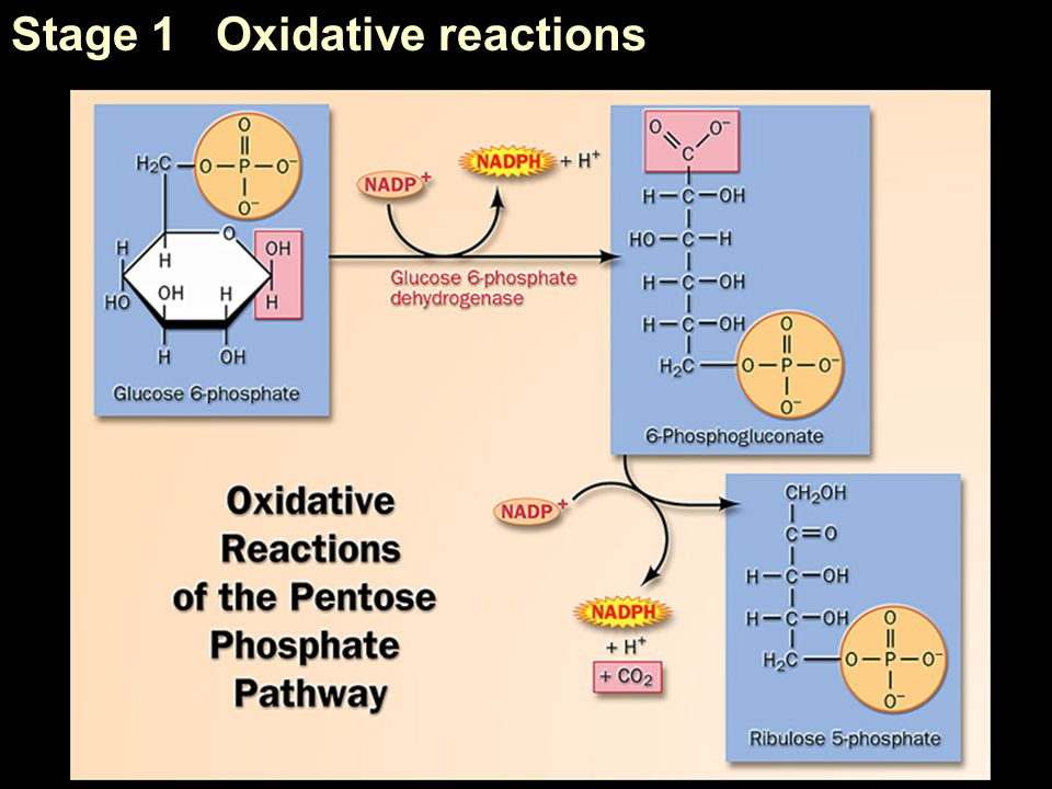 Stage 1 Oxidative reactions