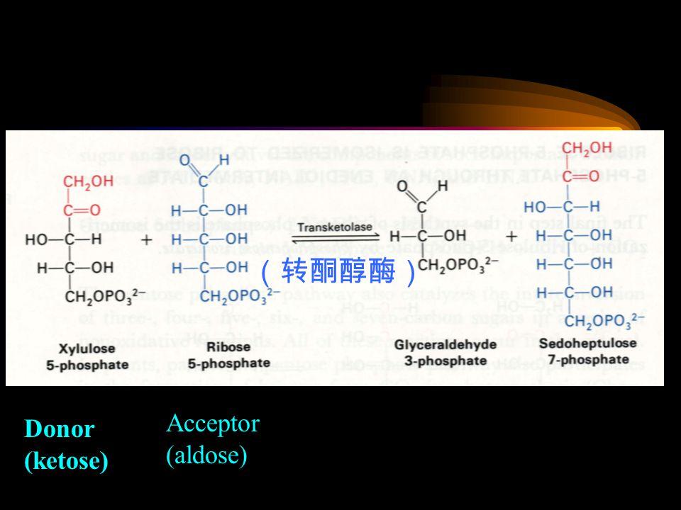 Donor (ketose) Acceptor (aldose) (转酮醇酶)