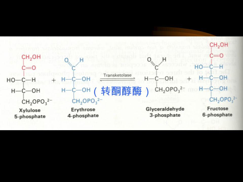 (转酮醇酶)