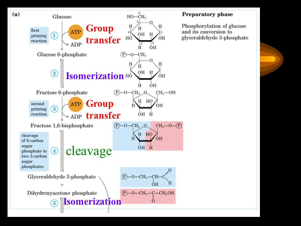 Group transfer Isomerization Group transfer cleavage Isomerization