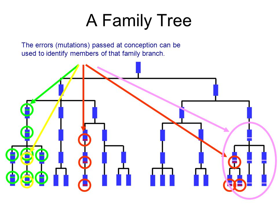 A Family Tree The errors (mutations) passed at conception can be used to identify members of that family branch.