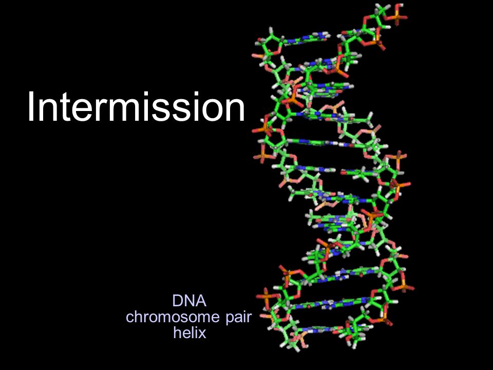 DNA chromosome pair helix Intermission