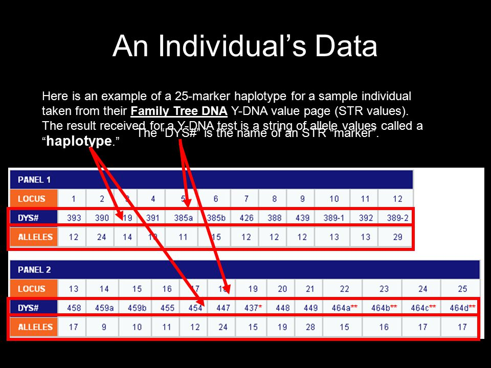 An Individual's Data Here is an example of a 25-marker haplotype for a sample individual taken from their Family Tree DNA Y-DNA value page (STR values).