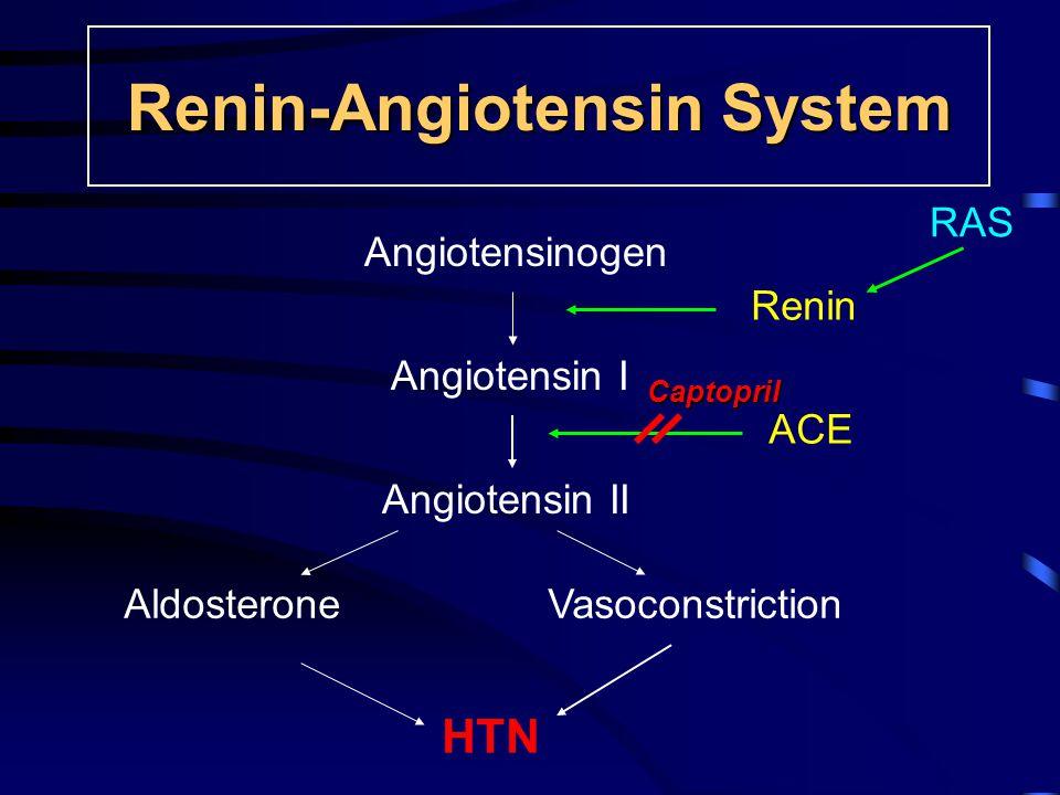 Renin-Angiotensin System RAS Captopril Angiotensinogen Angiotensin I Angiotensin II AldosteroneVasoconstriction HTN Renin ACE