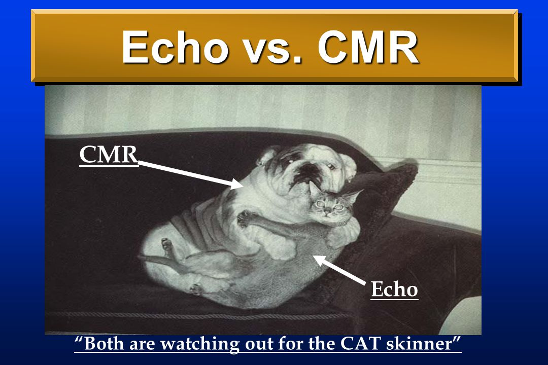 Echo vs. CMR CMR Echo Both are watching out for the CAT skinner