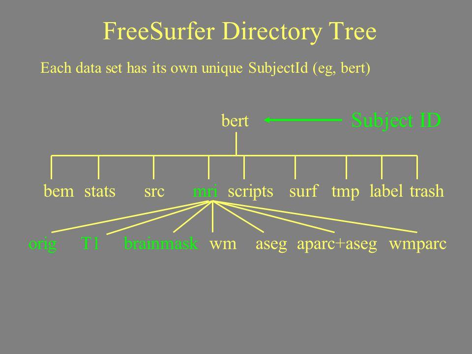 FreeSurfer Directory Tree Subject ID Each data set has its own unique SubjectId (eg, bert) bert bem stats src mri scripts surf tmp label trash orig T1