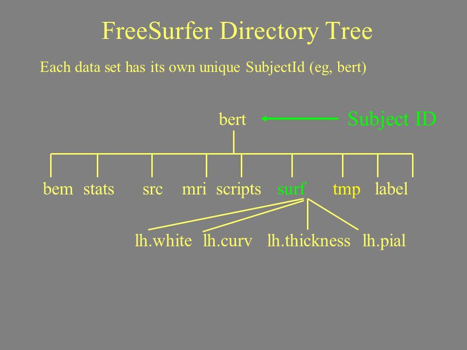 FreeSurfer Directory Tree Subject ID Each data set has its own unique SubjectId (eg, bert) bert bem stats src mri scripts surf tmp label lh.white lh.c