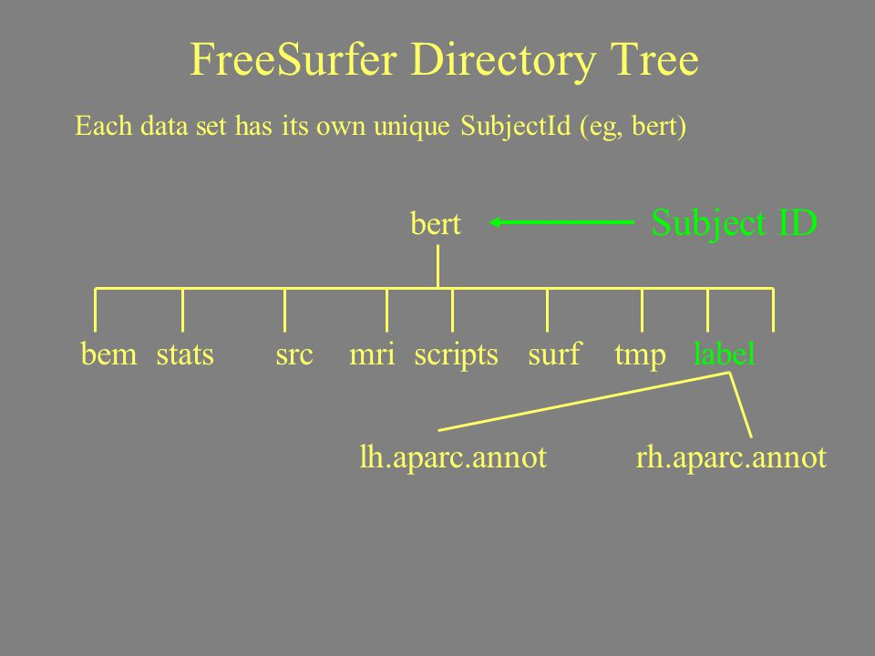 FreeSurfer Directory Tree Subject ID Each data set has its own unique SubjectId (eg, bert) bert bem stats src mri scripts surf tmp label lh.aparc.anno