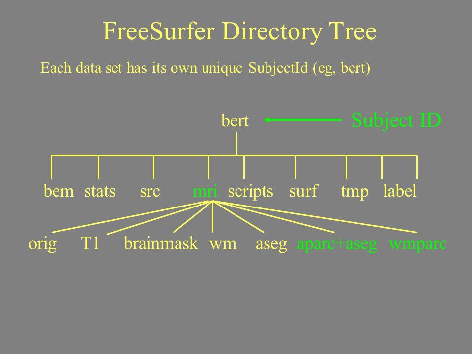 FreeSurfer Directory Tree Subject ID Each data set has its own unique SubjectId (eg, bert) bert bem stats src mri scripts surf tmp label orig T1 brain
