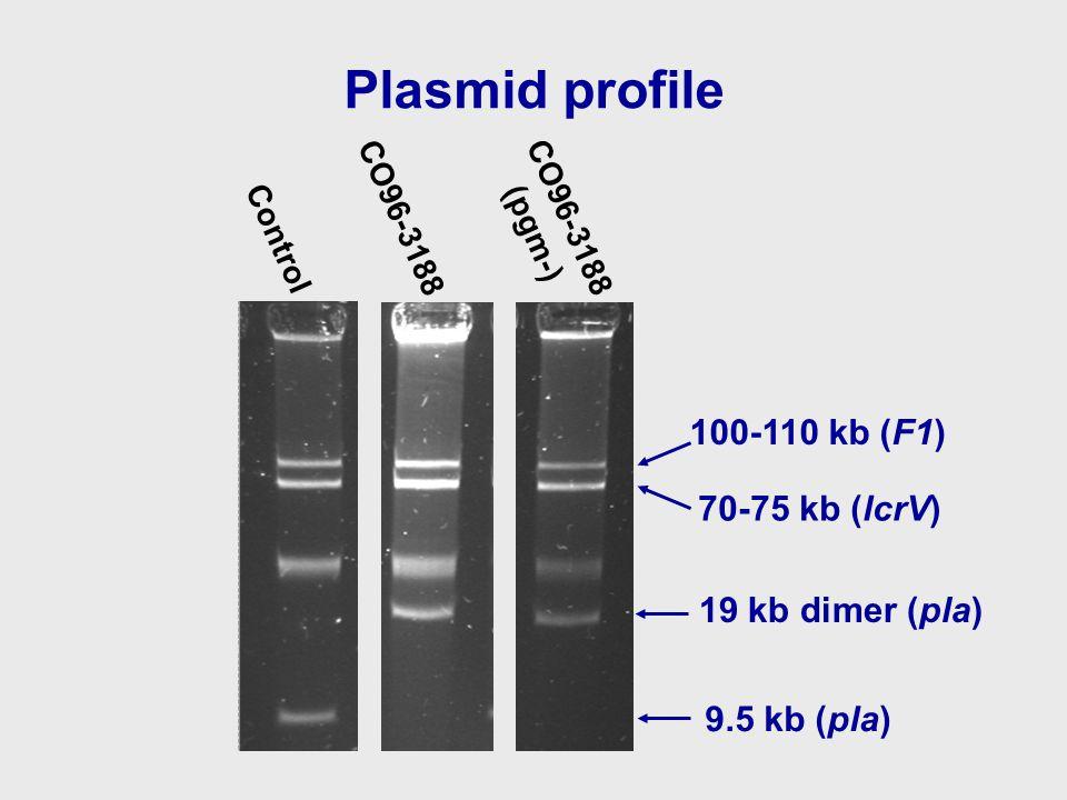 Plasmid profile CO96-3188 (pgm-) Control CO96-3188 9.5 kb (pla) 100-110 kb (F1) 70-75 kb (lcrV) 19 kb dimer (pla)