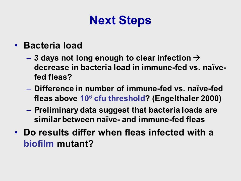 Next Steps Bacteria load –3 days not long enough to clear infection  decrease in bacteria load in immune-fed vs.