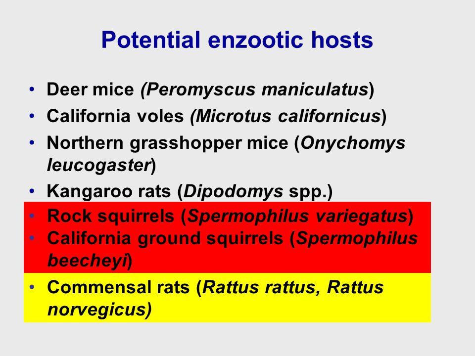 Potential enzootic hosts Deer mice (Peromyscus maniculatus) California voles (Microtus californicus) Northern grasshopper mice (Onychomys leucogaster) Kangaroo rats (Dipodomys spp.) Rock squirrels (Spermophilus variegatus) California ground squirrels (Spermophilus beecheyi) Commensal rats (Rattus rattus, Rattus norvegicus)