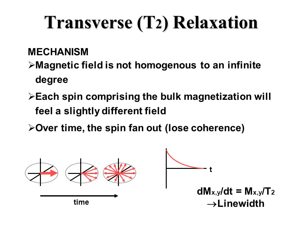Transverse (T 2 ) Relaxation t MECHANISM  Magnetic field is not homogenous to an infinite degree  Each spin comprising the bulk magnetization will feel a slightly different field  Over time, the spin fan out (lose coherence) dM x,y /dt = M x,y /T 2  Linewidth time