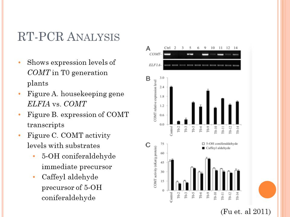 RT-PCR A NALYSIS Shows expression levels of COMT in T0 generation plants Figure A.