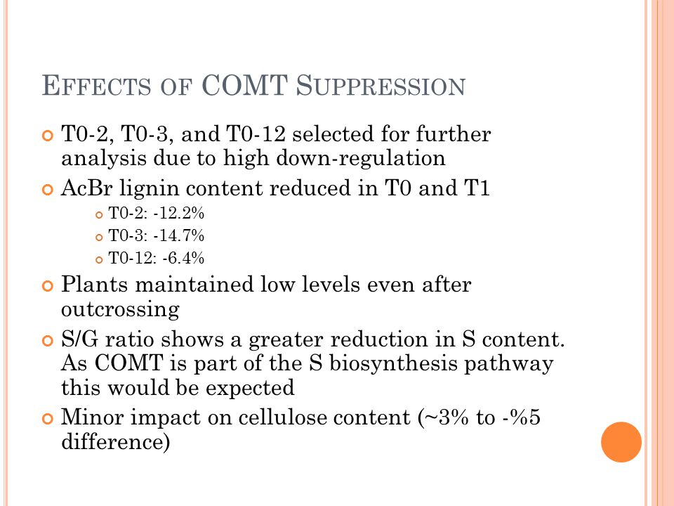 E FFECTS OF COMT S UPPRESSION T0-2, T0-3, and T0-12 selected for further analysis due to high down-regulation AcBr lignin content reduced in T0 and T1 T0-2: -12.2% T0-3: -14.7% T0-12: -6.4% Plants maintained low levels even after outcrossing S/G ratio shows a greater reduction in S content.