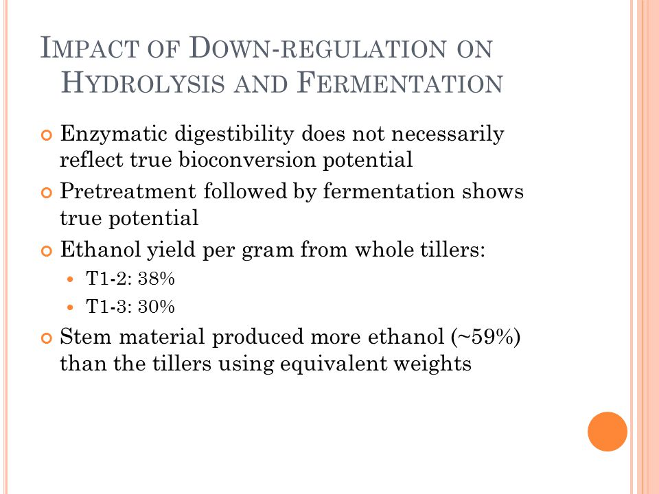 I MPACT OF D OWN - REGULATION ON H YDROLYSIS AND F ERMENTATION Enzymatic digestibility does not necessarily reflect true bioconversion potential Pretreatment followed by fermentation shows true potential Ethanol yield per gram from whole tillers: T1-2: 38% T1-3: 30% Stem material produced more ethanol (~59%) than the tillers using equivalent weights