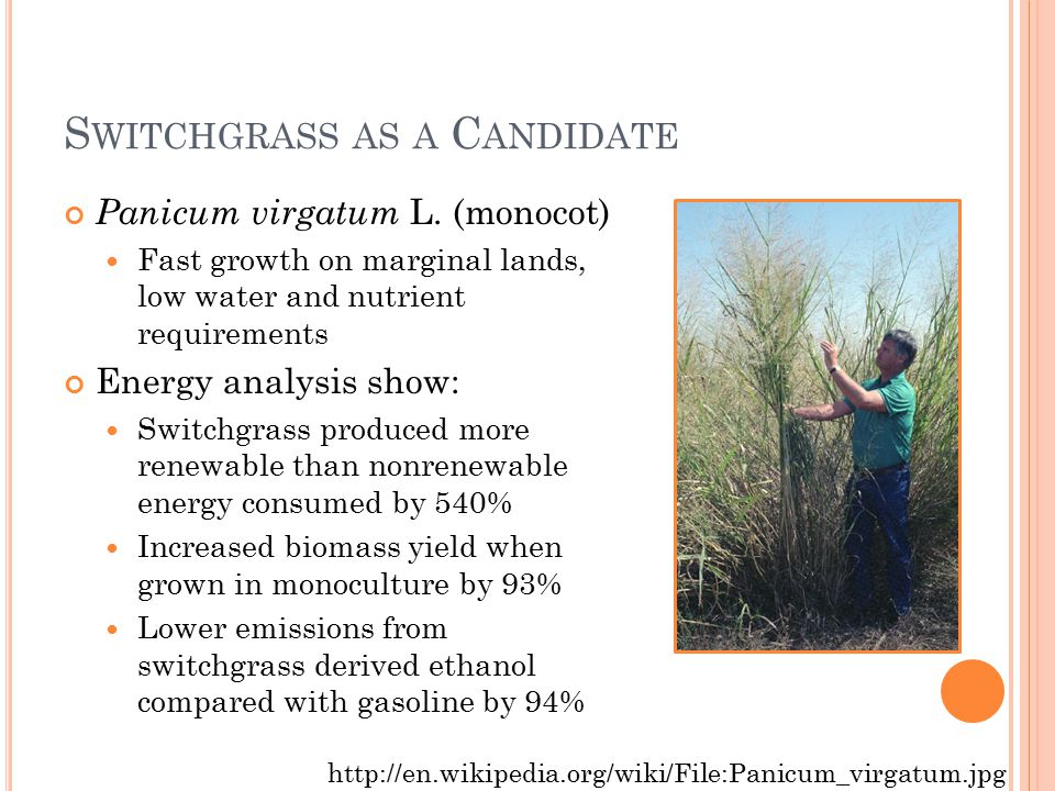 S WITCHGRASS AS A C ANDIDATE Panicum virgatum L.