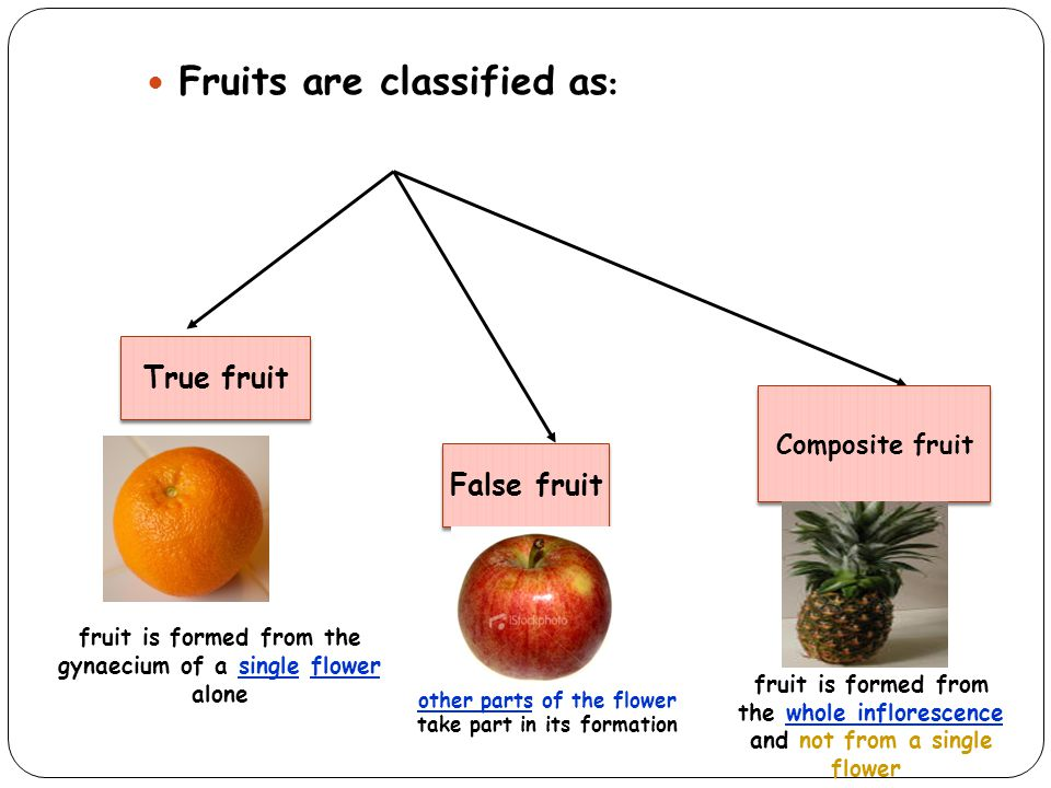 Fruits are classified as : True fruit False fruit Composite fruit fruit is formed from the gynaecium of a single flower alone other parts of the flowe