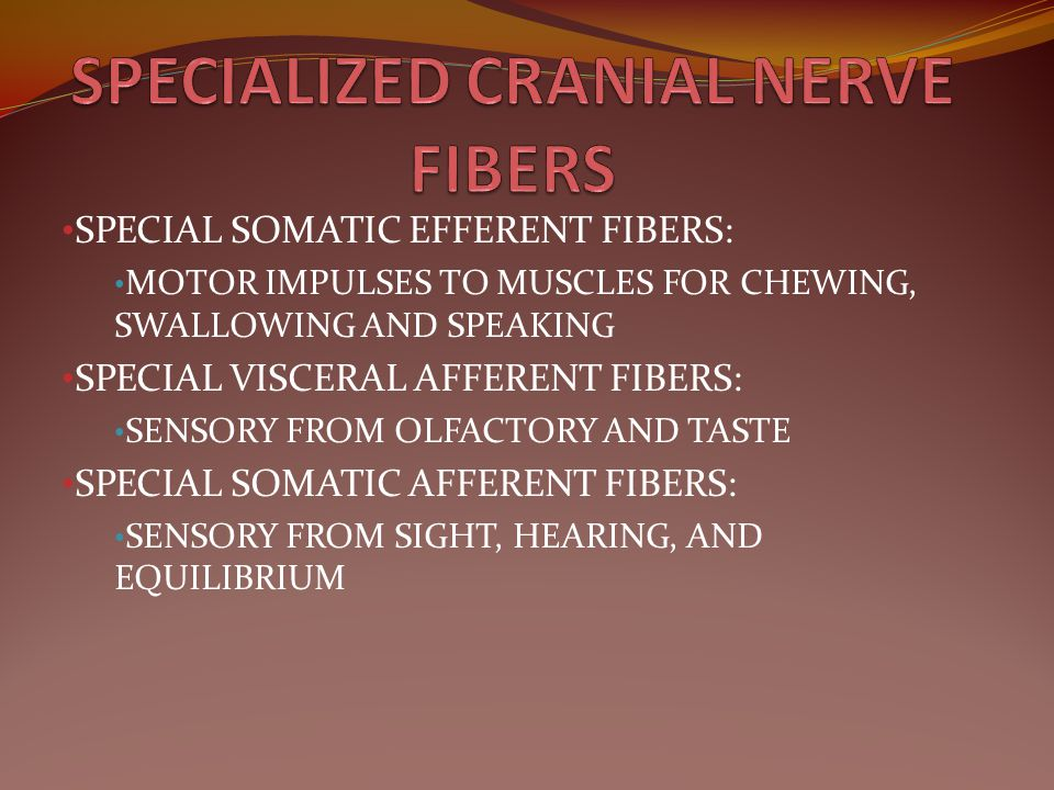 SPECIAL SOMATIC EFFERENT FIBERS: MOTOR IMPULSES TO MUSCLES FOR CHEWING, SWALLOWING AND SPEAKING SPECIAL VISCERAL AFFERENT FIBERS: SENSORY FROM OLFACTO