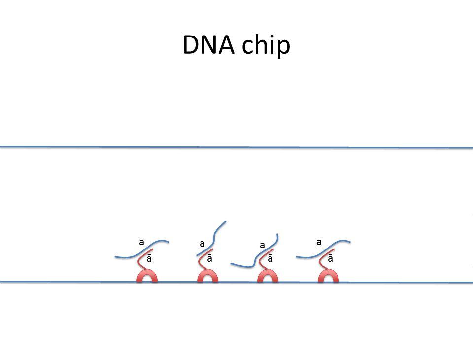 āāāā a a a a DNA chip