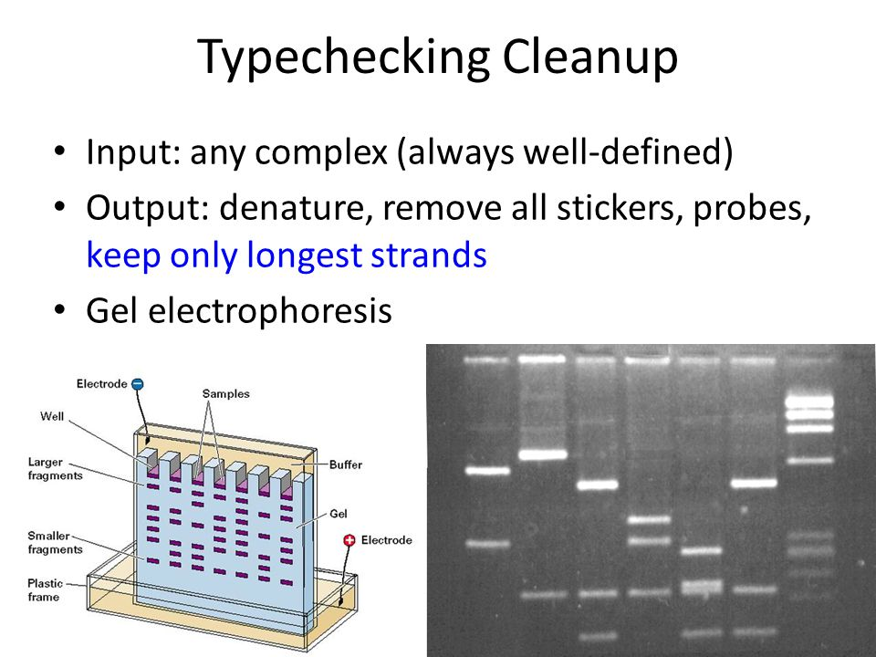 Typechecking Cleanup Input: any complex (always well-defined) Output: denature, remove all stickers, probes, keep only longest strands Gel electrophoresis
