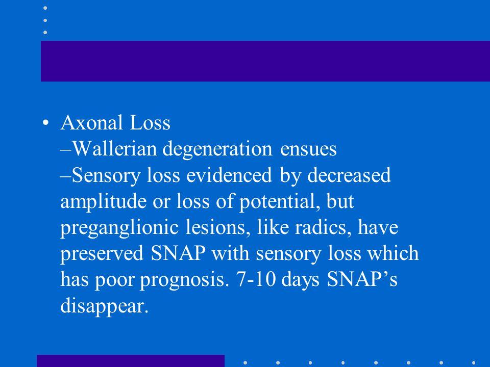 Axonal Loss –Wallerian degeneration ensues –Sensory loss evidenced by decreased amplitude or loss of potential, but preganglionic lesions, like radics
