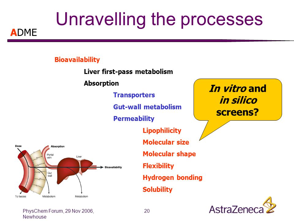 PhysChem Forum, 29 Nov 2006, Newhouse 20 Unravelling the processes Bioavailability Liver first-pass metabolism Absorption Transporters Gut-wall metabolism Permeability Lipophilicity Molecular size Molecular shape Flexibility Hydrogen bonding Solubility In vitro and in silico screens.
