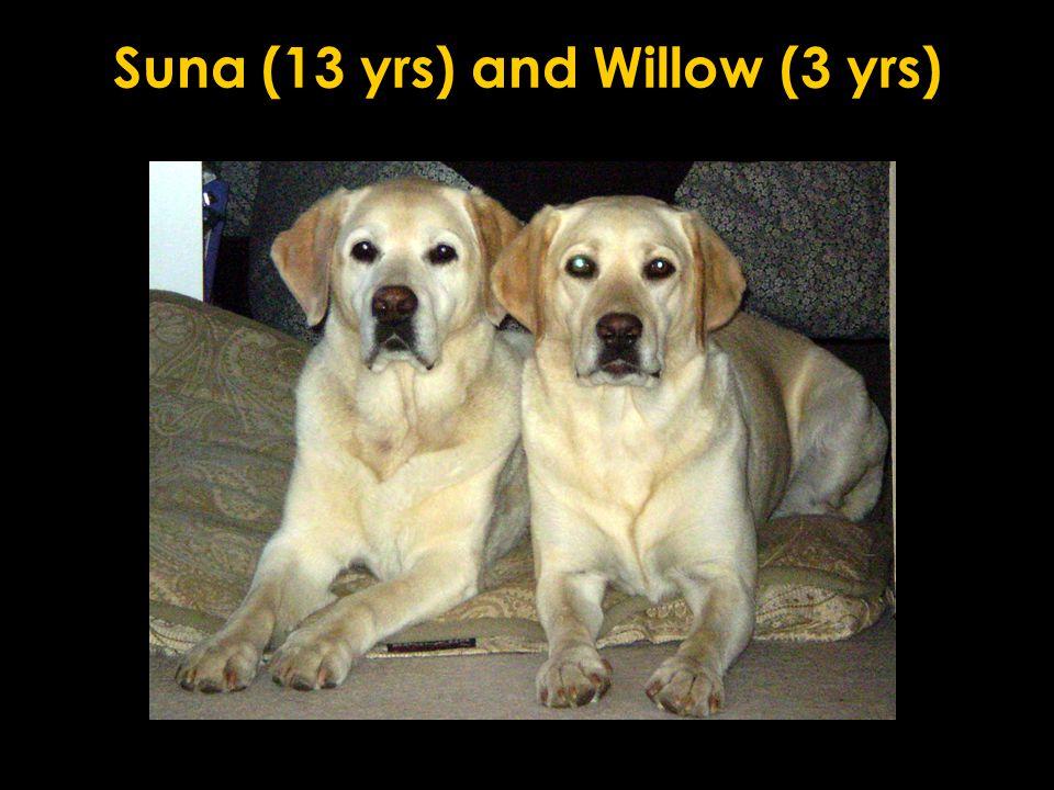 Suna (13 yrs) and Willow (3 yrs)