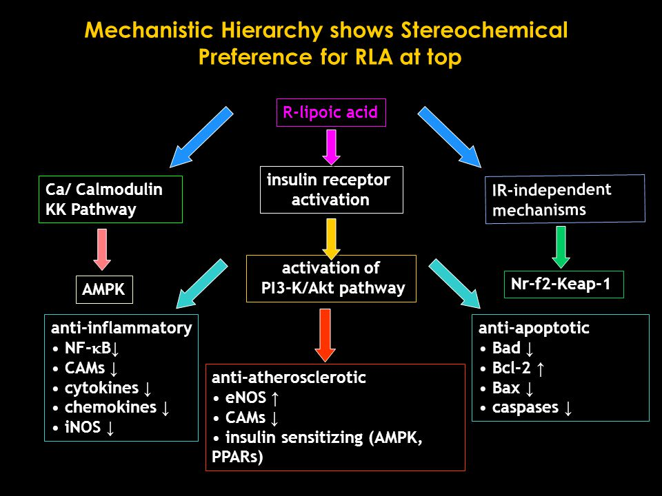 anti-atherosclerotic eNOS ↑ CAMs ↓ insulin sensitizing (AMPK, PPARs) anti-apoptotic Bad ↓ Bcl-2 ↑ Bax ↓ caspases ↓ R-lipoic acid insulin receptor activation activation of PI3-K/Akt pathway anti-inflammatory NF-  B ↓ CAMs ↓ cytokines ↓ chemokines ↓ iNOS ↓ IR-independent mechanisms Ca/ Calmodulin KK Pathway AMPK Mechanistic Hierarchy shows Stereochemical Preference for RLA at top Nr-f2-Keap-1