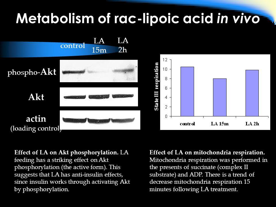 Metabolism of rac-lipoic acid in vivo phospho- Akt Akt actin (loading control) Effect of LA on Akt phosphorylation.