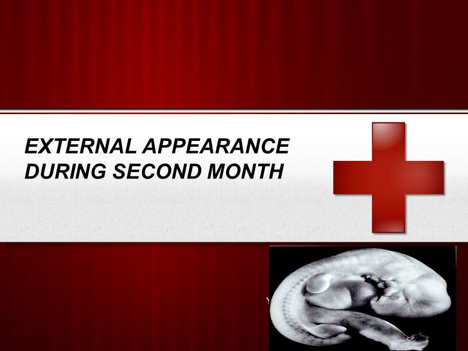 MONTHLY CHANGES  The growth of the head during fetal period is slow compared to the rest of body.