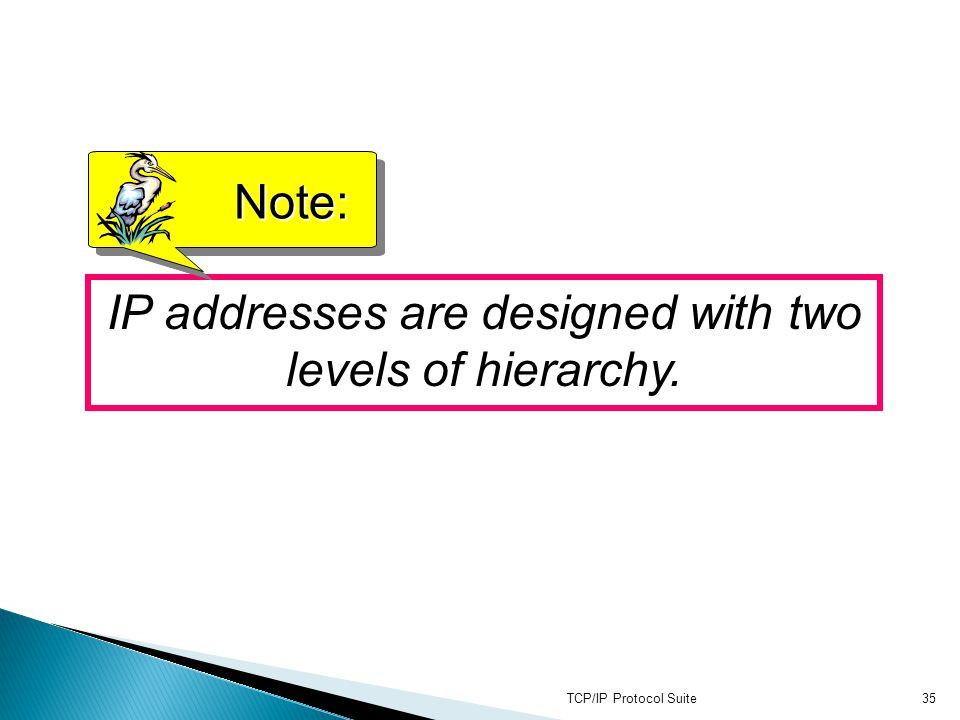 TCP/IP Protocol Suite35 IP addresses are designed with two levels of hierarchy. Note: