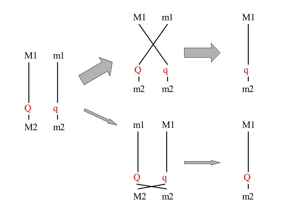 M1 Q M2 m1 q m2 M1 m2 M1 m2 m1 m2 m1 M2 M1 m2 M1 m2 Qq Qqq Q