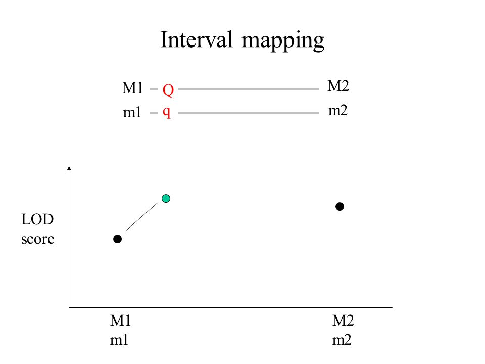 Interval mapping M1 M2 m1 m2 M1 m1 M2 m2 LOD score Q q