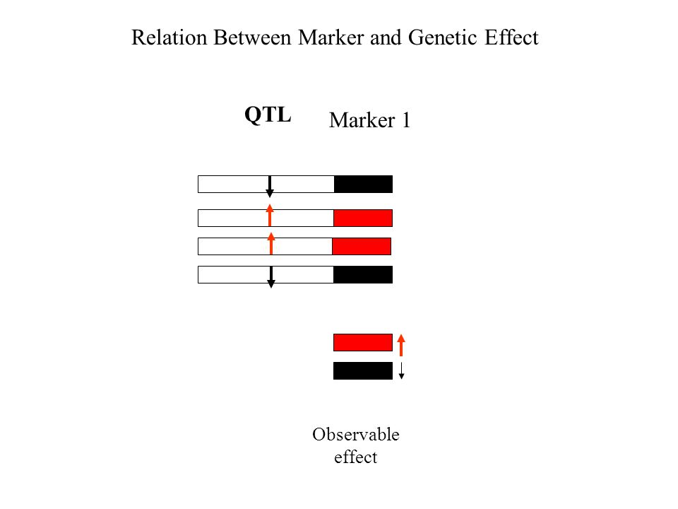 Relation Between Marker and Genetic Effect Observable effect QTL Marker 1