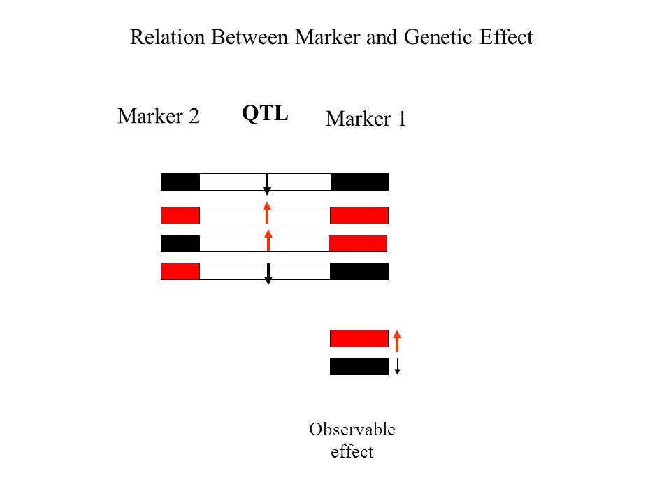 Relation Between Marker and Genetic Effect Observable effect QTL Marker 2 Marker 1