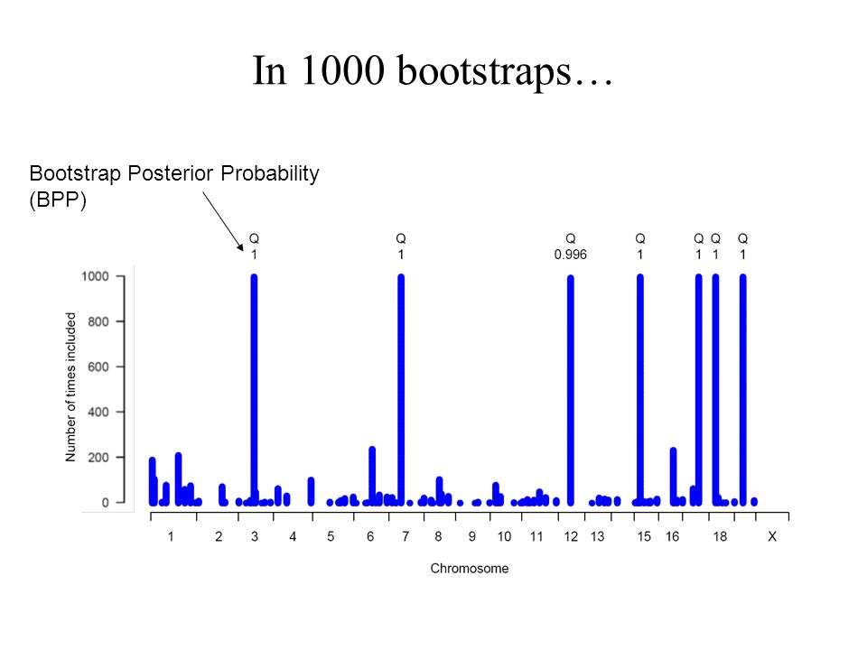 In 1000 bootstraps… Bootstrap Posterior Probability (BPP)