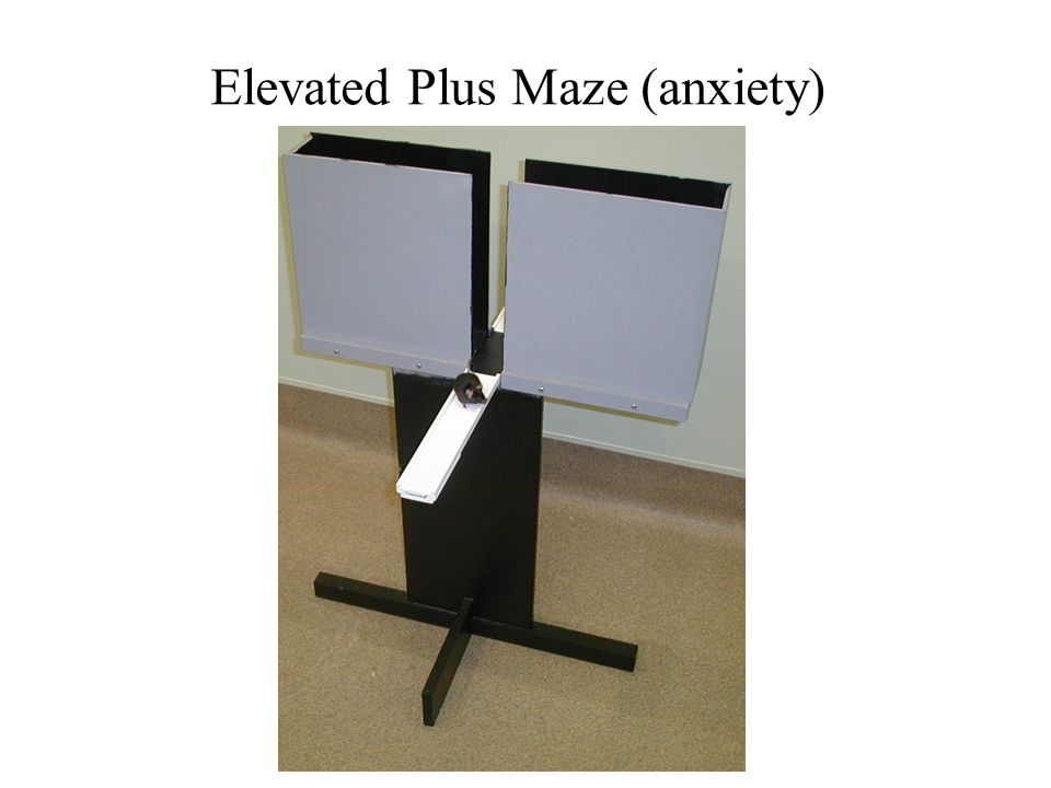 Elevated Plus Maze (anxiety)