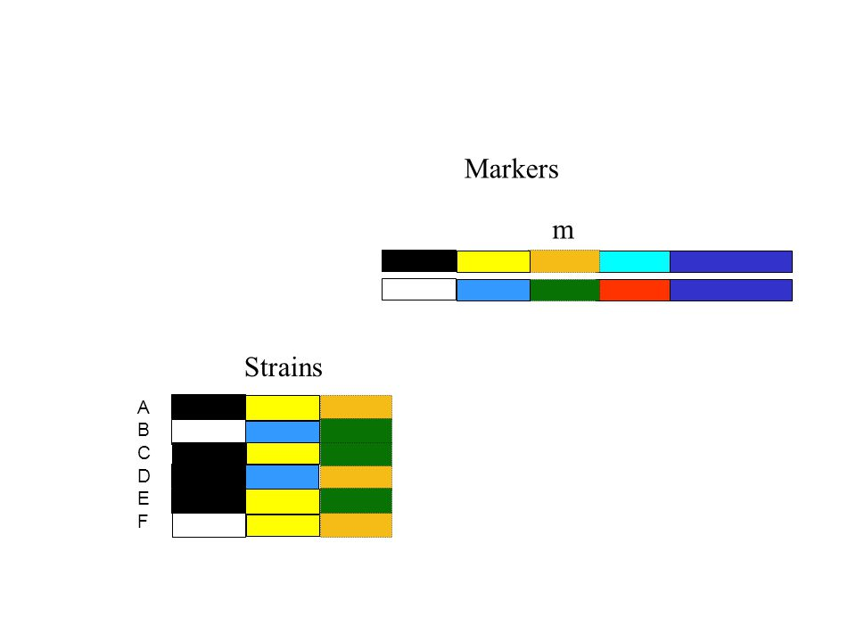 Markers m ABCDEFABCDEF Strains