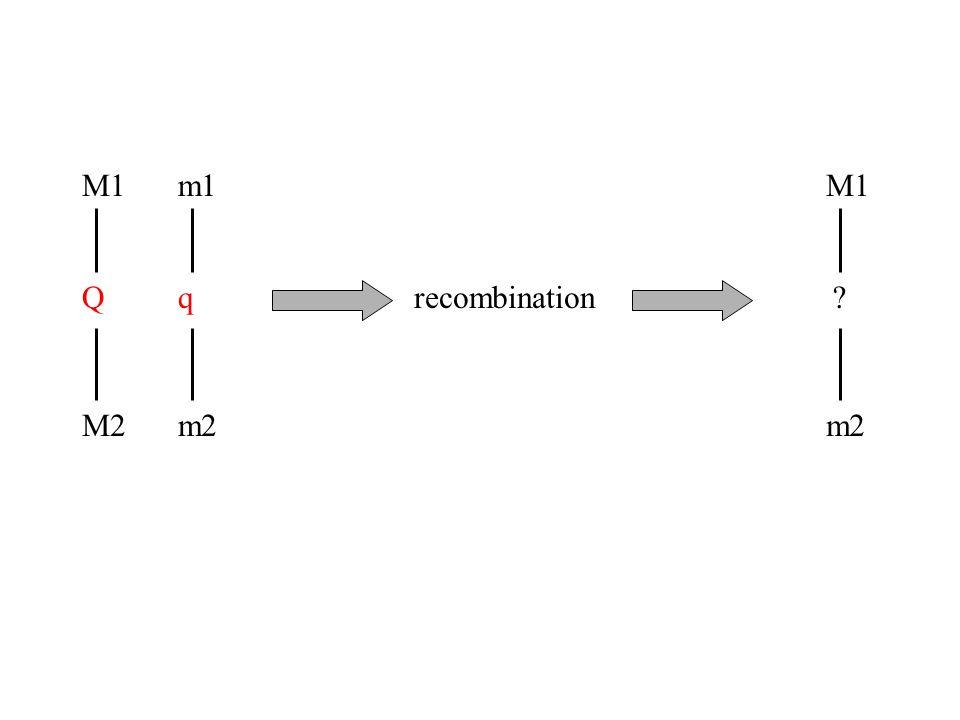 M1 Q M2 m1 q m2 M1 ? m2 recombination
