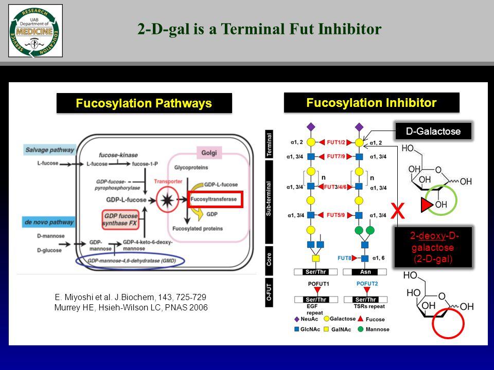 Fucosylation Inhibitor Murrey HE, Hsieh-Wilson LC, PNAS 2006 E.
