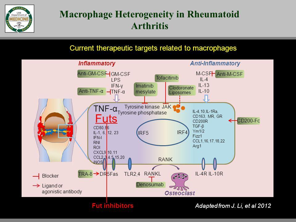 Inflammatory Anti-Inflammatory Osteoclast GM-CSF LPS IFN-γ TNF-α M-CSF IL-4 IL-13 IL-10 TNF-α CD80,86 IL-1, 6, 12, 23 IFN-I RNI ROI CXCL9,10,11 CCL2,3,4,5,15,20 iNOS IRF5 IRF4 DR5 IL-4,10,IL-1Ra, CD163, MR, GR CD200R TGF-β Ym1/2 Fizz1 CCL1,16,17,18,22 Arg1 FasTLR2,4 IL-4R IL-10R Tyrosine kinase Tyrosine phosphatase TRA-8 Anti-TNF-α Anti-GM-CSF Anti-M-CSF Clodoronate Liposomes CD200-Fc RANK RANKL Denosumab Imatinib mesylate Blocker Ligand or agonistic antibody Adapted from J.