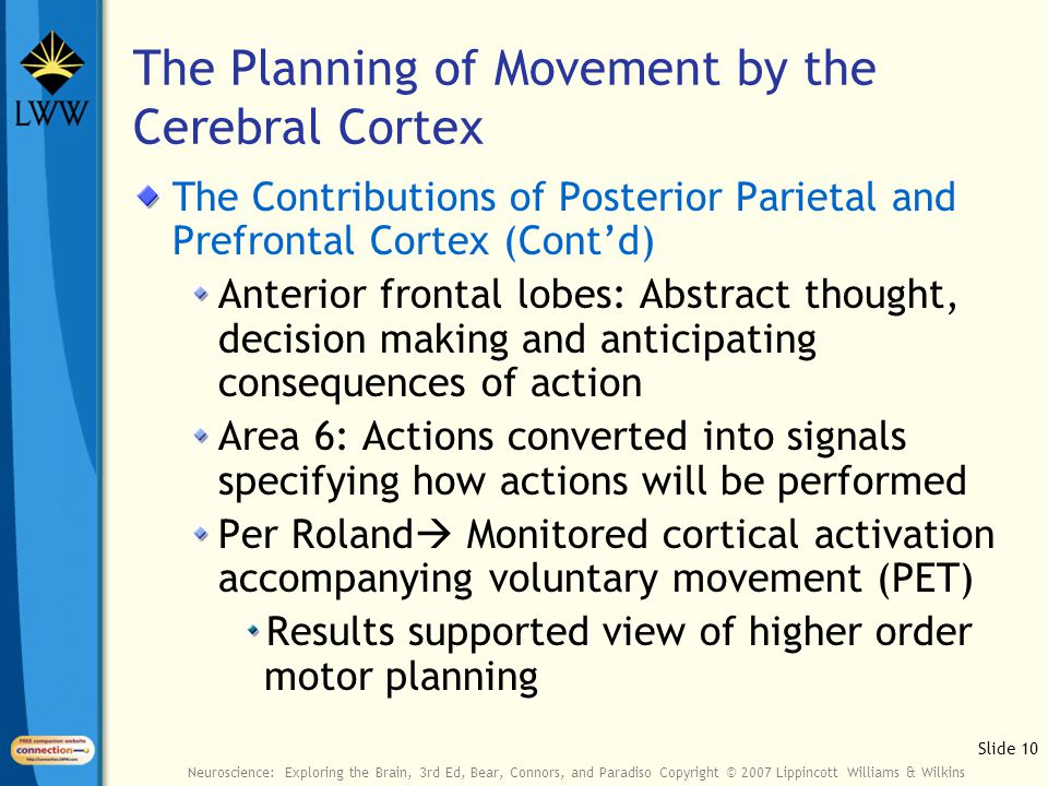 Slide 10 Neuroscience: Exploring the Brain, 3rd Ed, Bear, Connors, and Paradiso Copyright © 2007 Lippincott Williams & Wilkins The Planning of Movement by the Cerebral Cortex The Contributions of Posterior Parietal and Prefrontal Cortex (Cont'd) Anterior frontal lobes: Abstract thought, decision making and anticipating consequences of action Area 6: Actions converted into signals specifying how actions will be performed Per Roland  Monitored cortical activation accompanying voluntary movement (PET) Results supported view of higher order motor planning