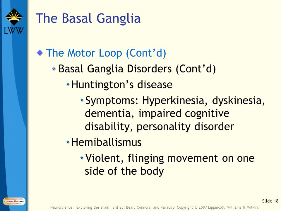 Slide 18 Neuroscience: Exploring the Brain, 3rd Ed, Bear, Connors, and Paradiso Copyright © 2007 Lippincott Williams & Wilkins The Basal Ganglia The Motor Loop (Cont'd) Basal Ganglia Disorders (Cont'd) Huntington's disease Symptoms: Hyperkinesia, dyskinesia, dementia, impaired cognitive disability, personality disorder Hemiballismus Violent, flinging movement on one side of the body