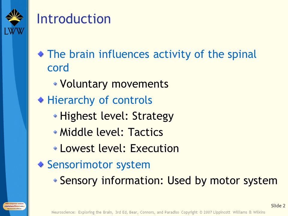 Slide 2 Neuroscience: Exploring the Brain, 3rd Ed, Bear, Connors, and Paradiso Copyright © 2007 Lippincott Williams & Wilkins Introduction The brain influences activity of the spinal cord Voluntary movements Hierarchy of controls Highest level: Strategy Middle level: Tactics Lowest level: Execution Sensorimotor system Sensory information: Used by motor system