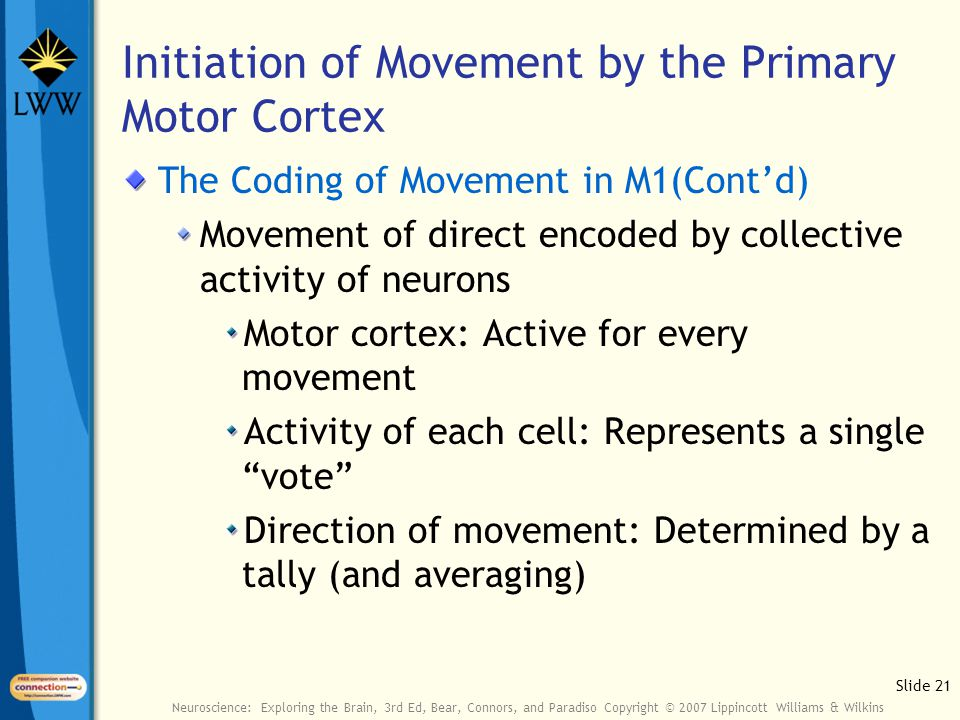 Slide 21 Neuroscience: Exploring the Brain, 3rd Ed, Bear, Connors, and Paradiso Copyright © 2007 Lippincott Williams & Wilkins Initiation of Movement by the Primary Motor Cortex The Coding of Movement in M1(Cont'd) Movement of direct encoded by collective activity of neurons Motor cortex: Active for every movement Activity of each cell: Represents a single vote Direction of movement: Determined by a tally (and averaging)
