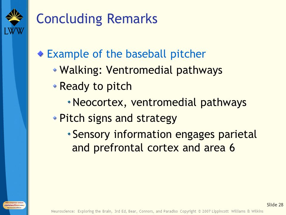 Slide 28 Neuroscience: Exploring the Brain, 3rd Ed, Bear, Connors, and Paradiso Copyright © 2007 Lippincott Williams & Wilkins Concluding Remarks Example of the baseball pitcher Walking: Ventromedial pathways Ready to pitch Neocortex, ventromedial pathways Pitch signs and strategy Sensory information engages parietal and prefrontal cortex and area 6